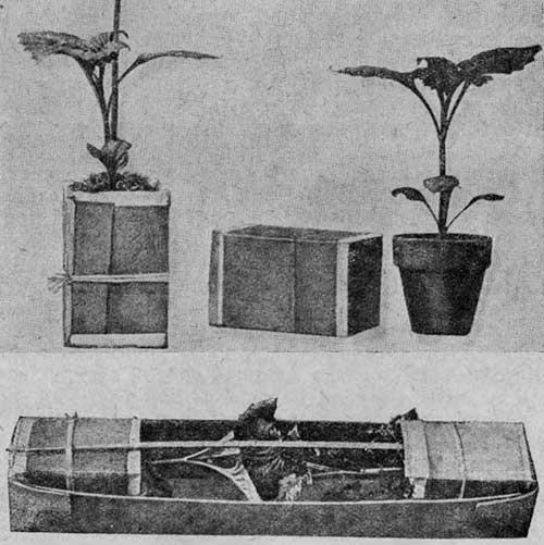 Образцы упаковки черенкованных растений, предназначенных к отправке почтовой посылкой