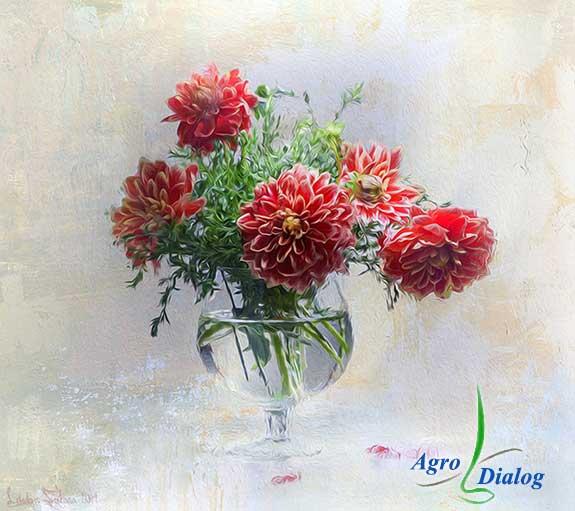 Букет цветов георгин