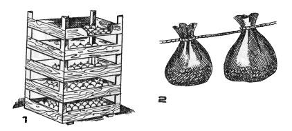 Хранение клубнелуковиц зимой: 1 – в ящиках; 2 – в марлевых мешках