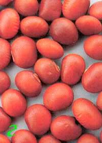 Окраска оболочки семян сои: г – коричневая