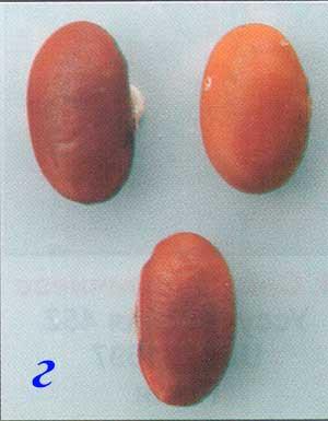 Форма семян сои: