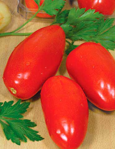 Сорт томата Карась