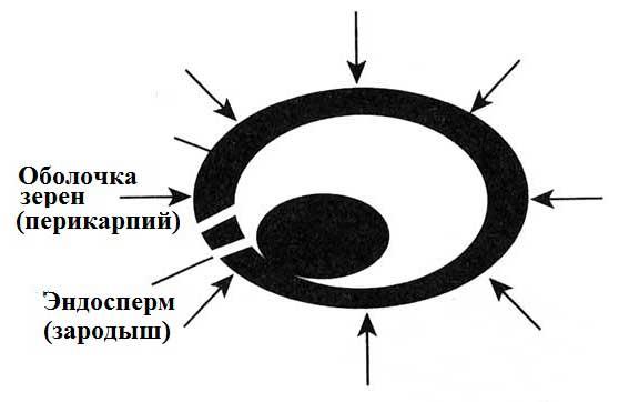 Схема действия электронной обработки семян
